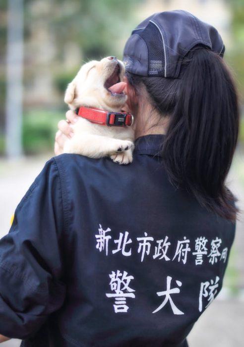 perrito cachorro policía