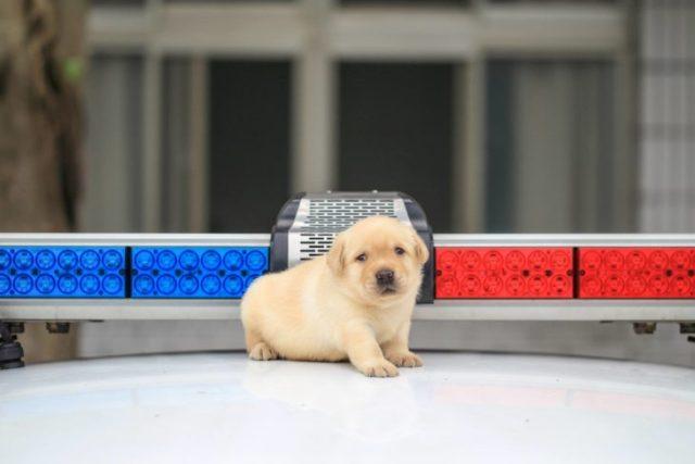 patrulla con un cachorro k9