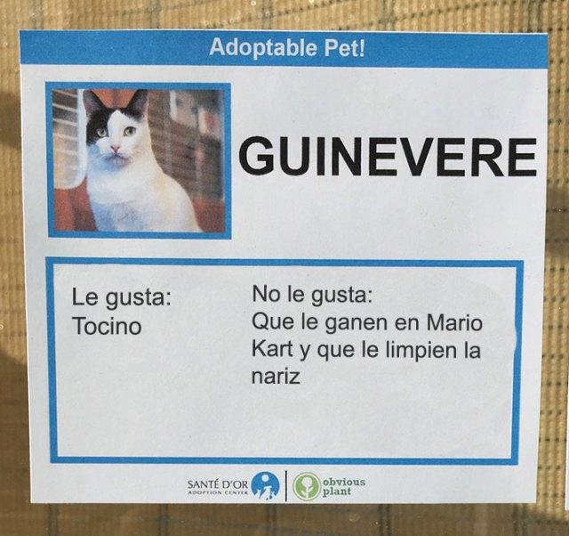 tocino descripción gato en adopción