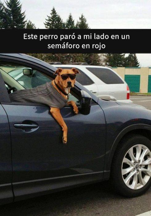 Snaps perritos - chucho en la calle