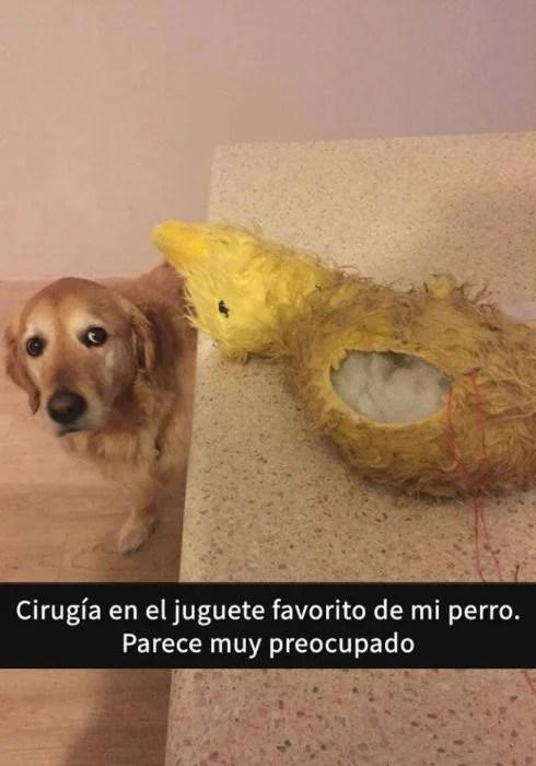 Snaps perritos - cirugía juguete