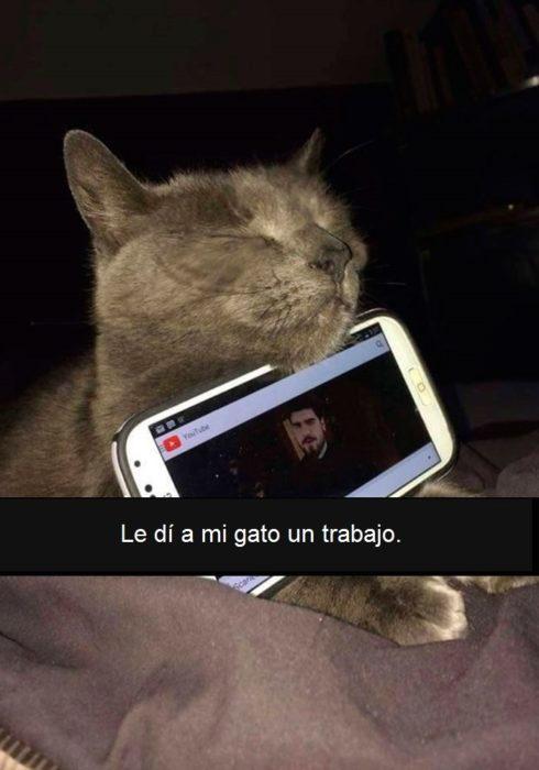 gato dormido deteniendo celular