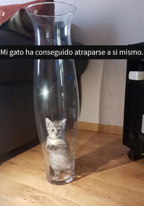 gato atorado en jarrón