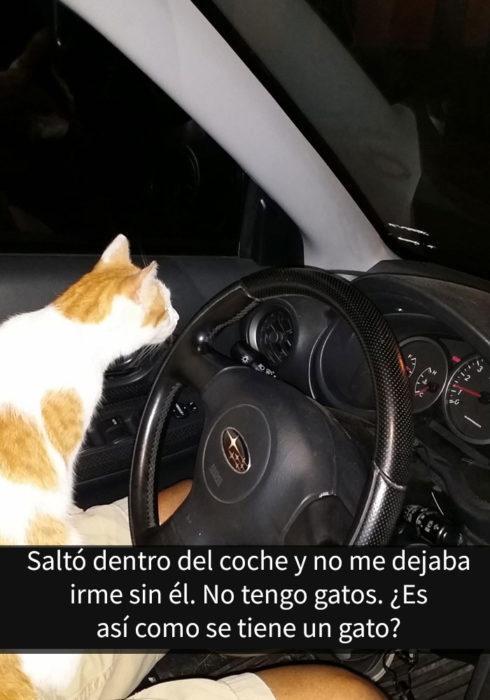 gato en carro