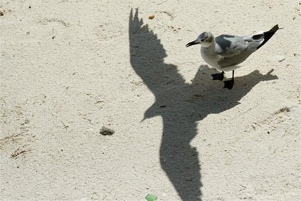 Gaviota en la playa sombra vuela