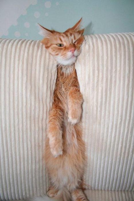 gato sillón plastado