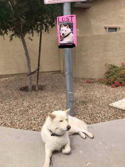 perro perdido engañosa alarma