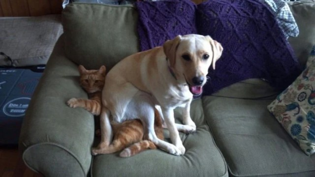 perro sentado sobre el gato