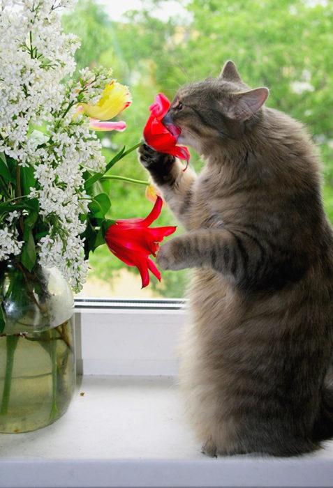 Gatos tiernos olfatear flores