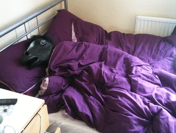 caballo cama