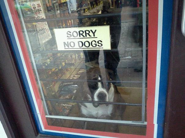 Letrero SORRY NO DOGS y chucho adentro