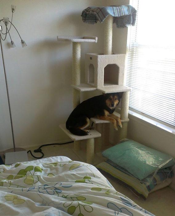 perro en juego de gatito