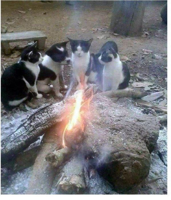 tres gatitos y un perro