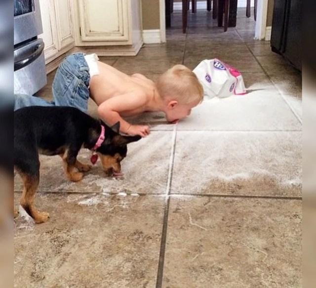 Niño y chucho comen del piso