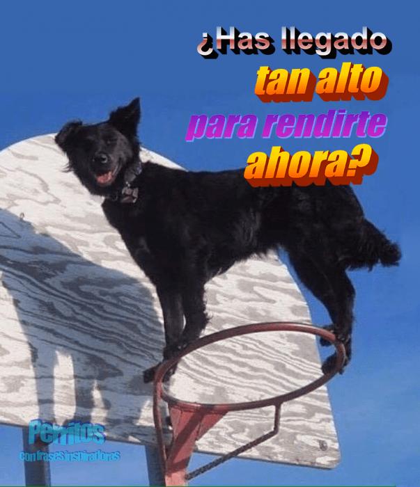 perro en una canasta