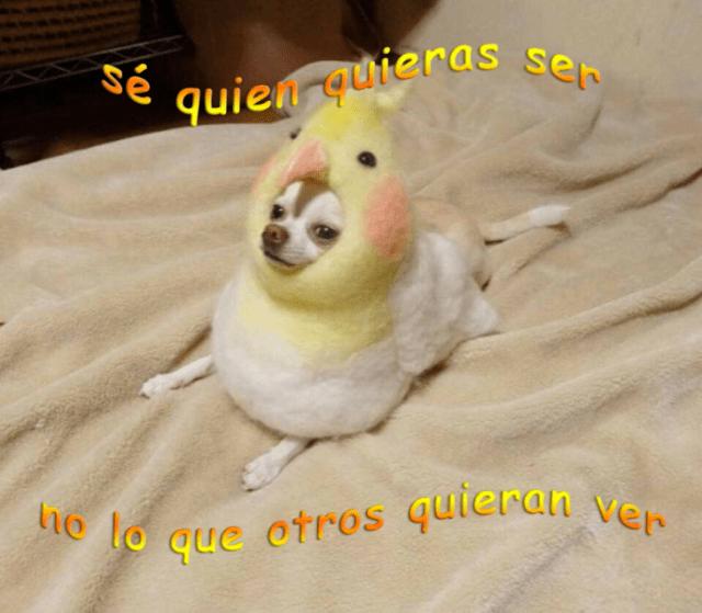 pollito disfraz de perrito
