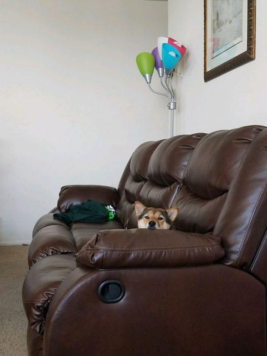 perro viendo a su propietario en el sillón