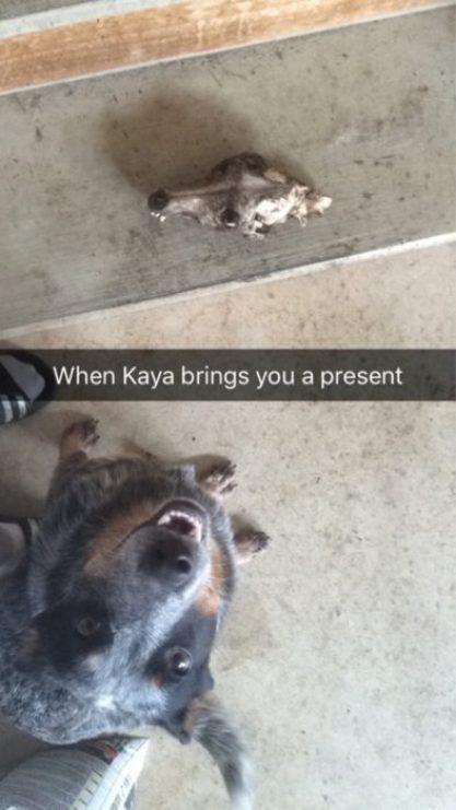 Gato regalo cráneo hueso