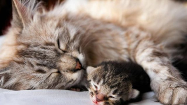 gatitos cuidado cachorros con su madre