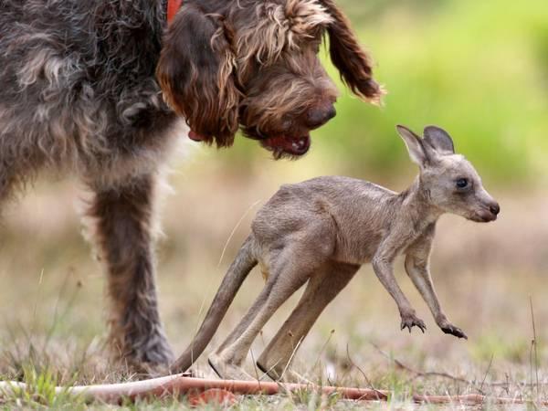 perro con canguro