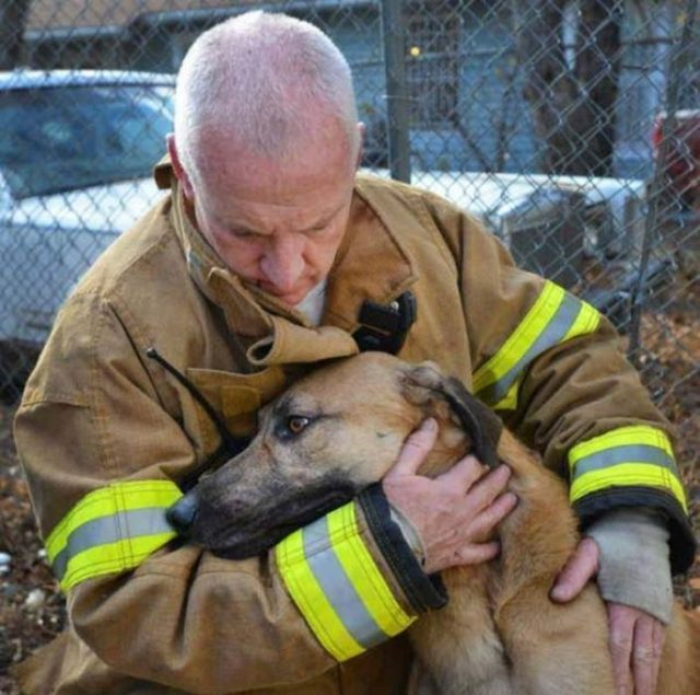 perro rescate bombero