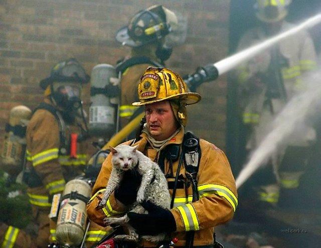 bombero salvando un gato
