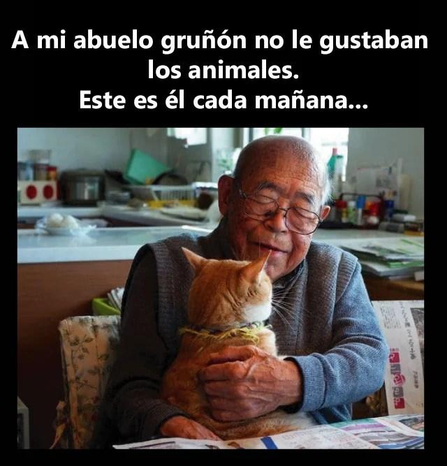 Abuelo otorga cariños a gato