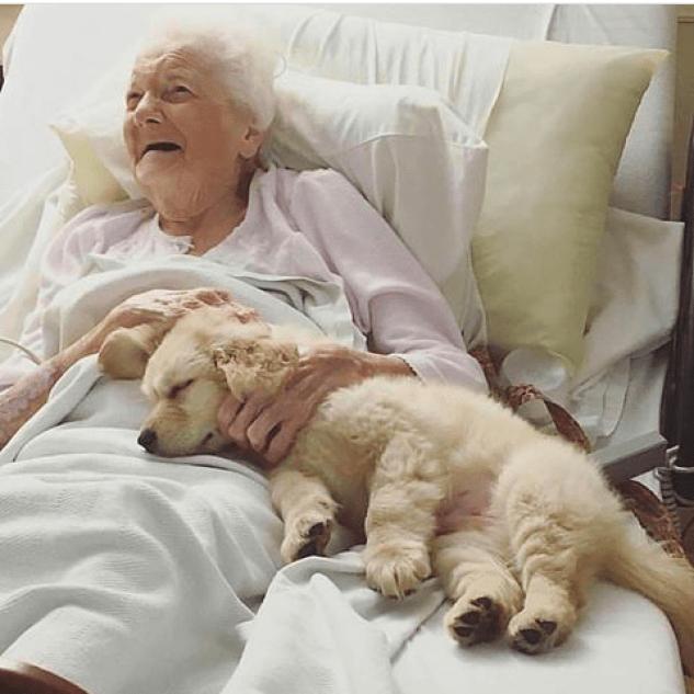 el consentido de la abuela