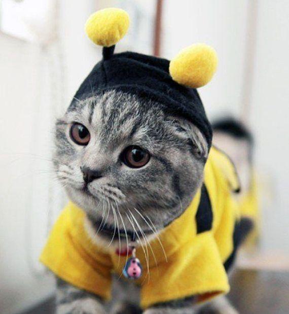 Gato abeja