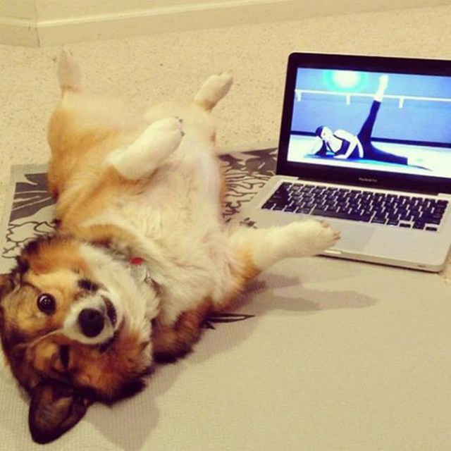 Yoga perruno