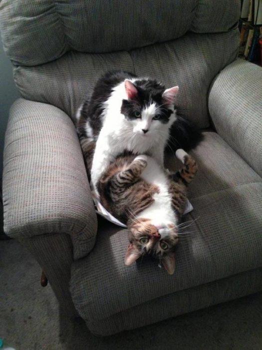 Gatos sensuales instante intimo
