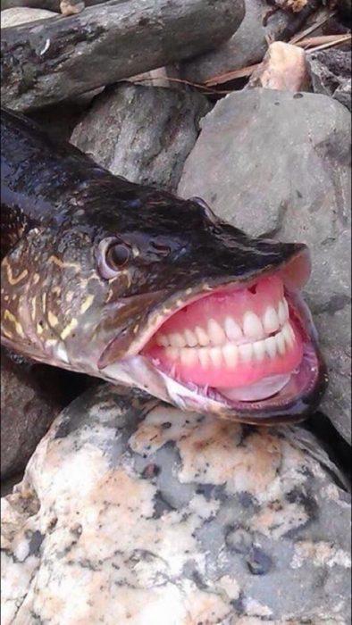 pez dientes