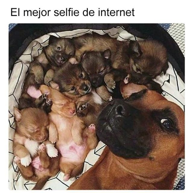 selfie tierna