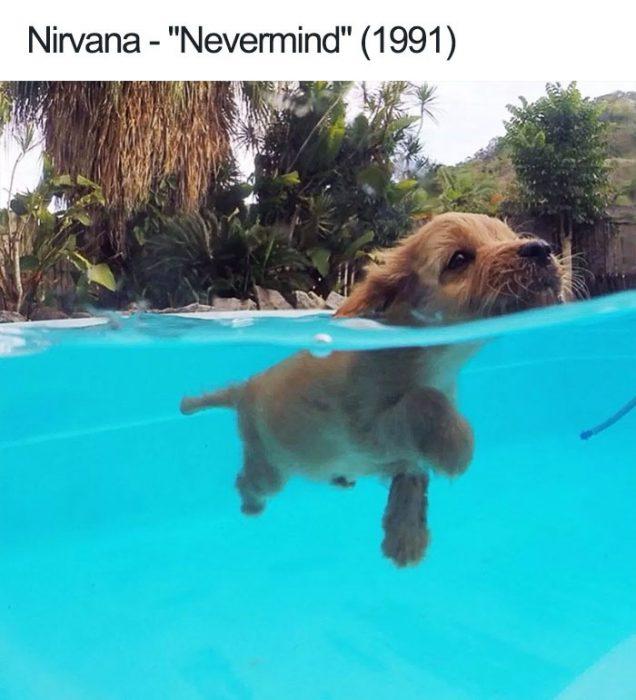 nirvana perro
