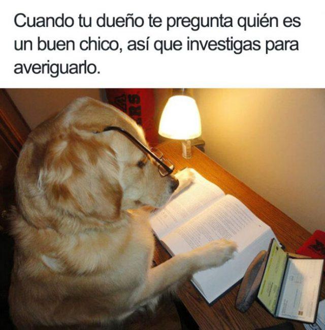 perrito estudioso