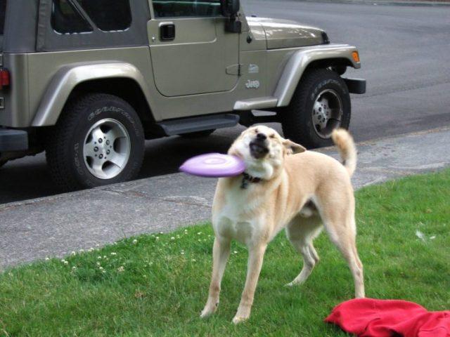 perrito platillo volador