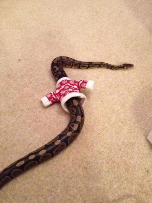 víbora suéter