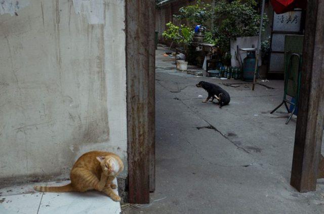 perro gatito