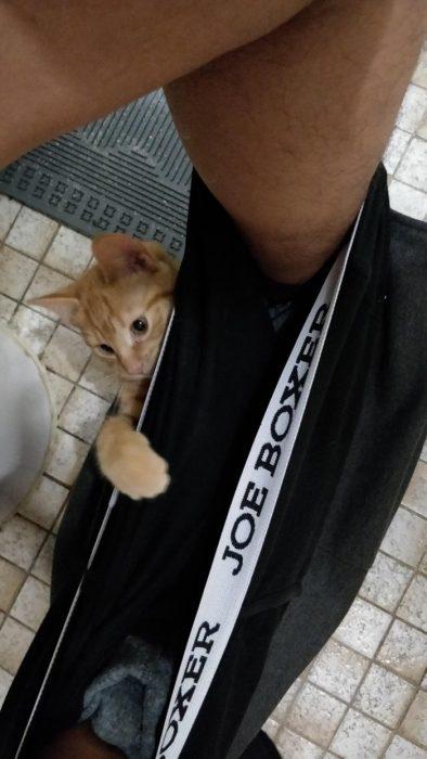 gatito en el baño