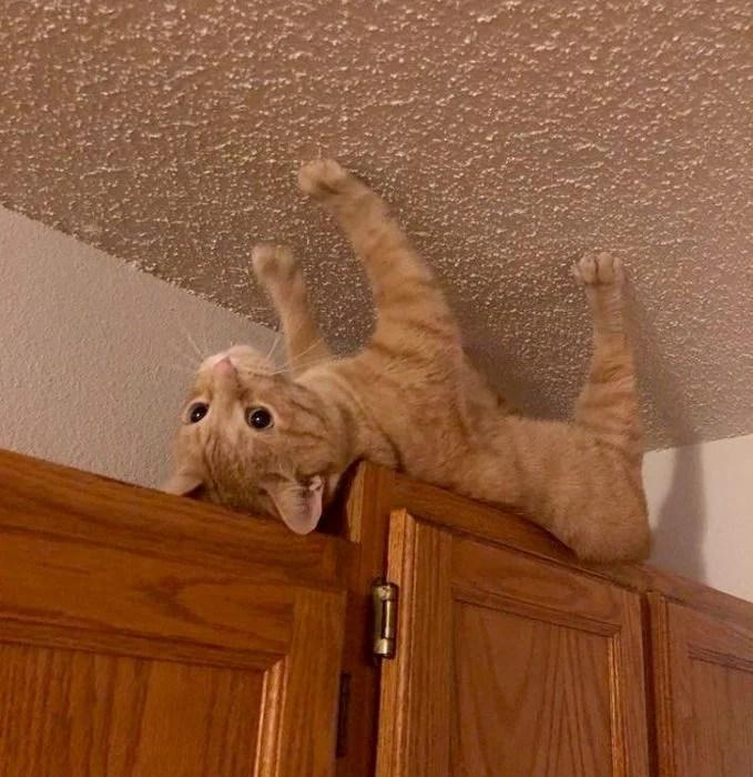 gato techo