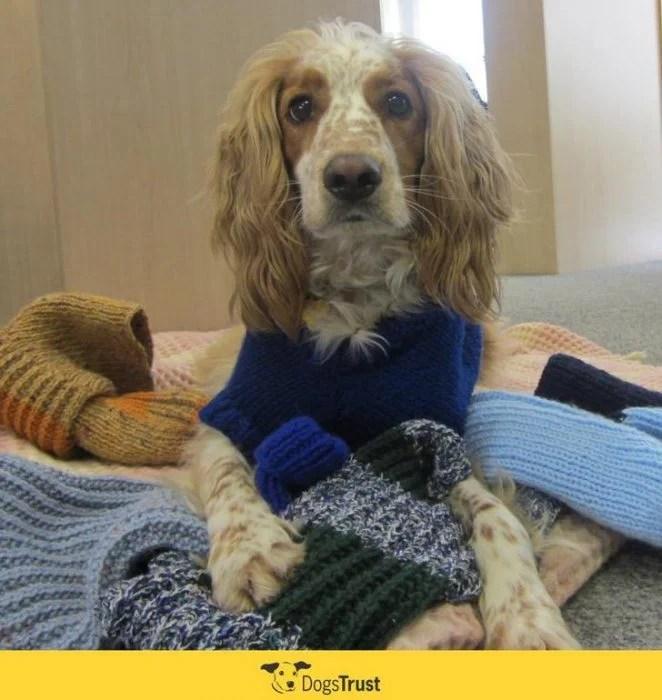 viejita tejedora para perros recreoviral.com