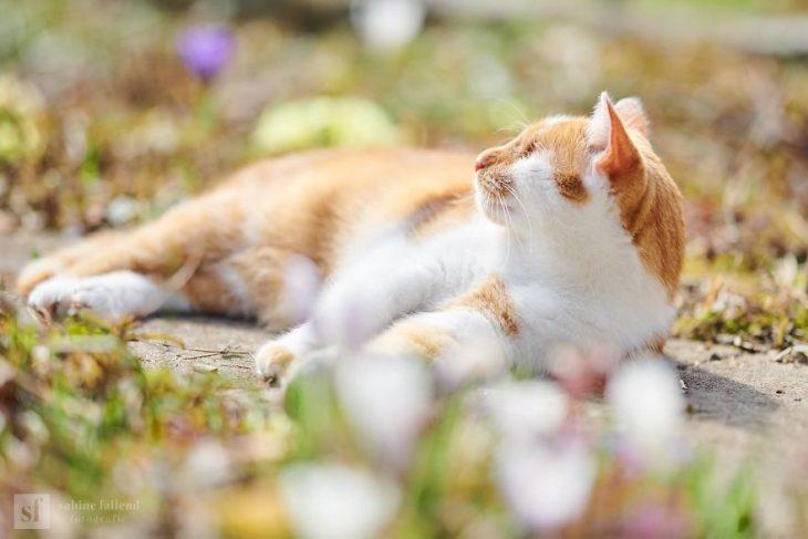 Gatito que naci%C3%B3 sin ojos recreoviral 10 730x487 - Conoce a Kazou, un gatito sin ojos que se robará tu corazón
