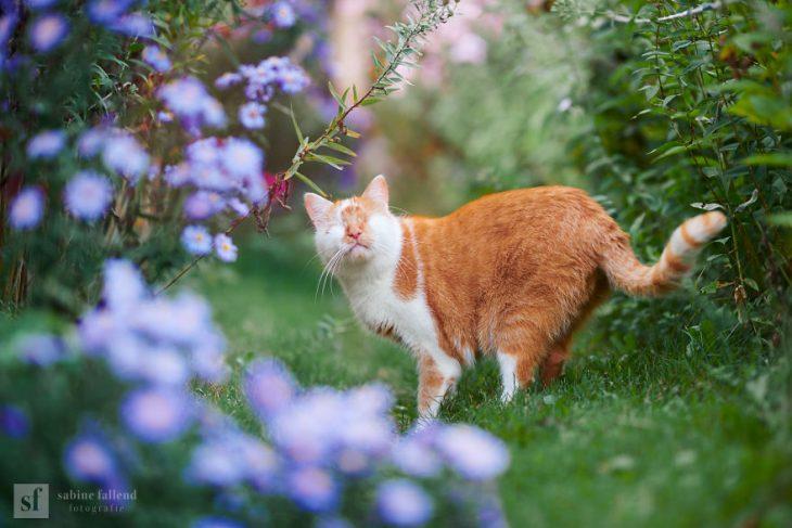 Gatito que naci%C3%B3 sin ojos recreoviral 4 730x487 - Conoce a Kazou, un gatito sin ojos que se robará tu corazón