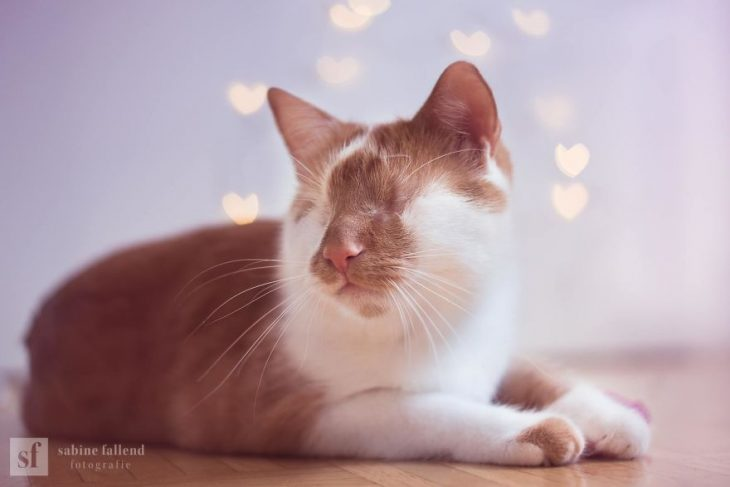 Gatito que naci%C3%B3 sin ojos recreoviral 6 730x487 - Conoce a Kazou, un gatito sin ojos que se robará tu corazón