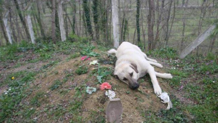 cachorro no túmulo de seu dono