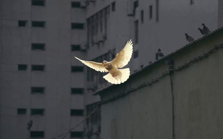 orar al espiritu santo