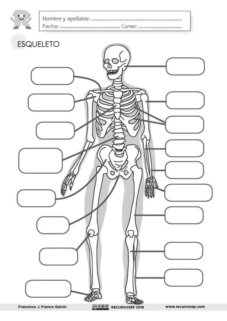 Esqueleto Humano Para Colorear Con Partes En Ingles Del Cuerpo