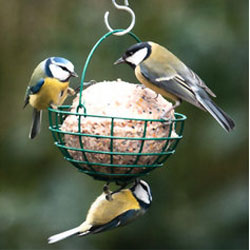 CJ Wildlife Giant Fat Ball Bird Feeder