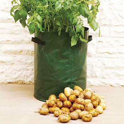 Potato Growing Bag 40 Litre