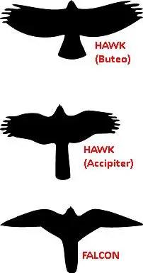 silhouette_buteo_accipiter_falcon_alt_nps_acad